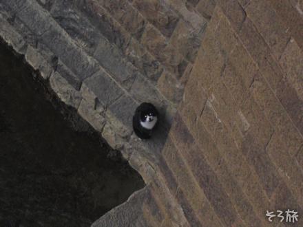橋の下の猫