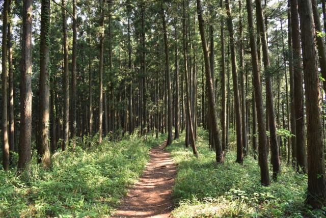 相模湖への下山道